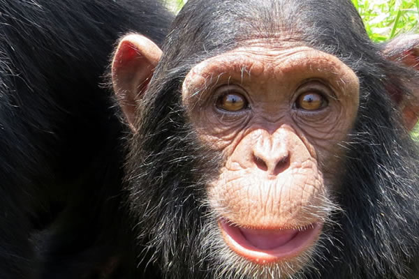 9 Day Exclusive Primate